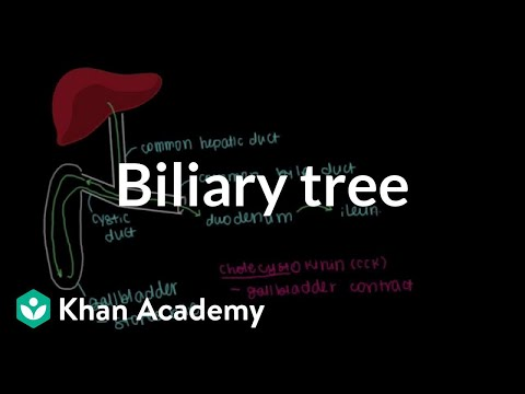 Biliary tree | Gastrointestinal system physiology | NCLEX-RN | Khan Academy