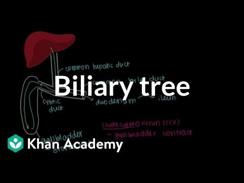 Biliary tree | Gastrointestinal system physiology | NCLEX-RN | Khan Academy