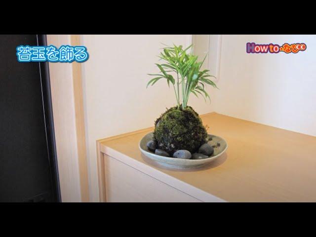 苔玉の作り方【コメリHowToなび】