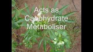 Medicinal Plant Hibiscus sabdariffa in Pankaj Oudhia
