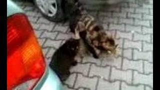 Atla sikişmek isteyen güzel seyis  Sürpriz Porno Hd Türk