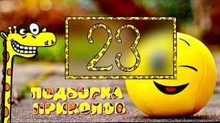 Смешные видео 23 Апрель 2021 подборка приколов