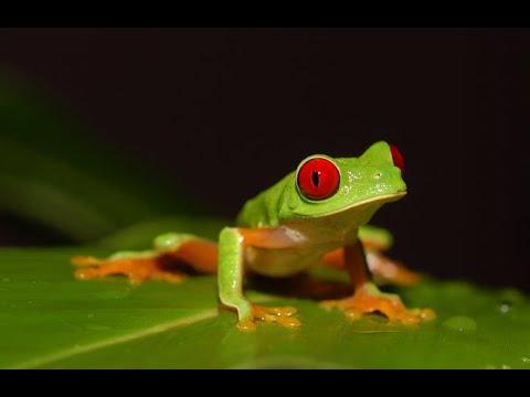 LEJANO ORIENTE - Documental Naturaleza HD 1080p - Grandes ...