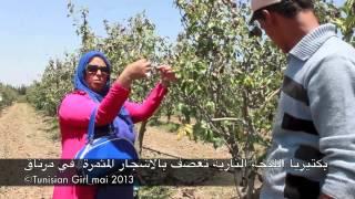 الاشجار المثمرة التونسية في خطر