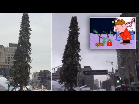 Montreal Tried to Out-do New York City's Famous Christmas Tree