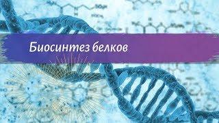 Биология 9 класс Пасечник $9 Биосинтез белка