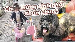 Chúc mừng sinh nhật Chun Chun cũng là ngày Cam biết đi xe đạp Vlog 209
