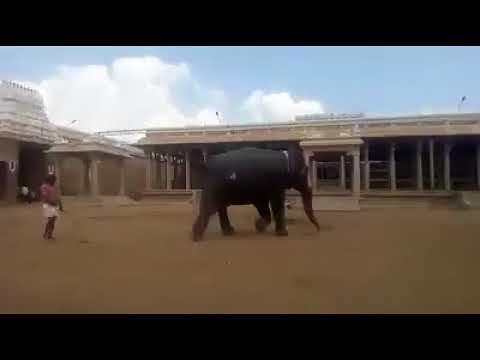 Srirangam Temple Elephant Andal