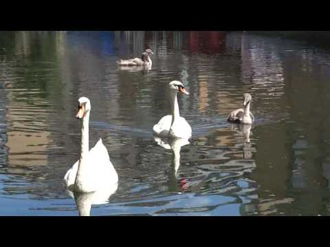 At Regent's Canal, London