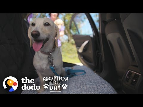 Dog Siblings Go On A Cross-Country Road Trip To Their Forever Homes | The Dodo Adoption Day