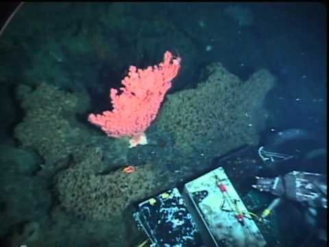Welker Seamount Sponge Reef