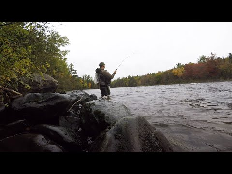 Fly Fishing Fall Brook Trout - East Outlet, Maine