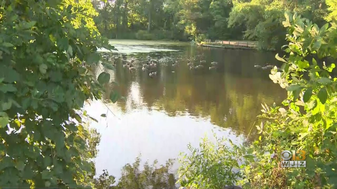 Man In Critical Condition After Near-Drowning At Golden Ring Park