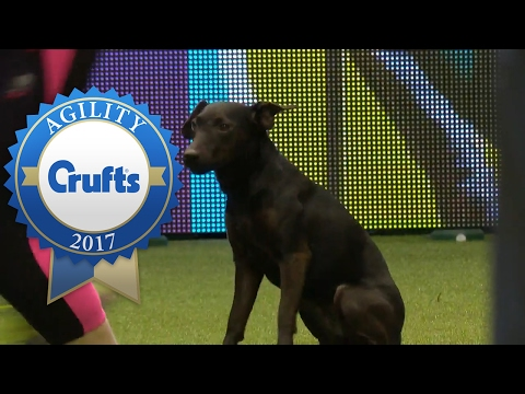 Agility - Kennel Club Novice Cup Agility Final (Part 1) | Crufts 2017