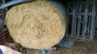 Welsh Farm Life #1- Feeding!!