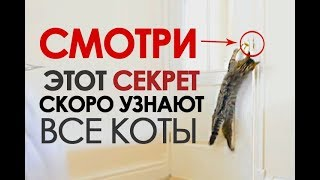 ПРИКОЛЫ С КОТАМИ подборка 2018  КОТЫ ОТКРЫВАЮТ ДВЕРЬ # JOKES WITH CATS # funny cats