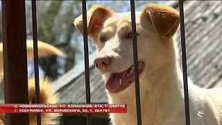Бесплатные прививки для домашних животных