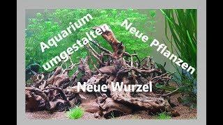 Aquarium umgestalten | Pflanzen und Wurzel einsetzen