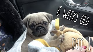 Bringing Stanley Home | Day 1 Part 1