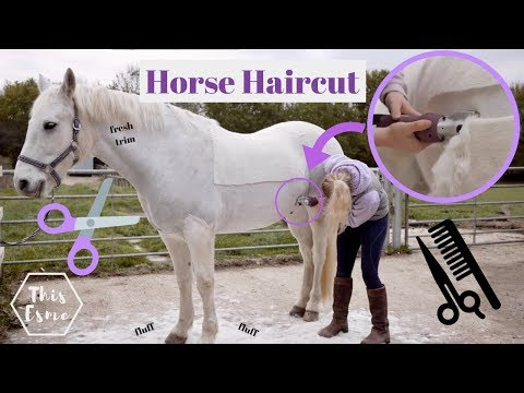 HORSE HAIRCUT | Clipping my horse MYSELF for the first time... | This Esme