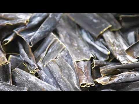 alga kombu propiedades y usos
