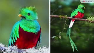 Учителю биологии. Видеоурок «Мир птиц»