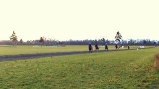 Trening koni wyścigowych 2015-12-13 Partynice