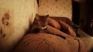 ужасы про кота