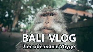 БАЛИ ВЛОГ - Лес обезьян в Убуде. Напала злая мартышка