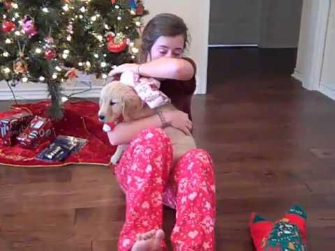 McKenna's Christmas Puppy Surprise - YouTube