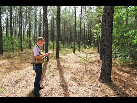 Buying Time For Working Forests