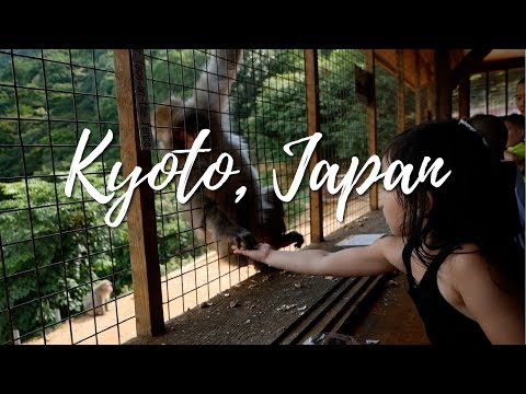 4 Yr Old Makes Friends with Monkeys | Kyoto, Japan