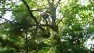 Tarzan 2008