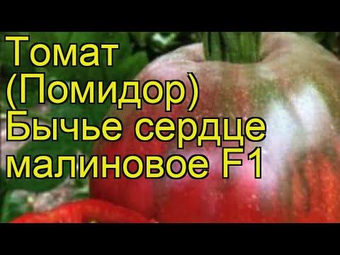 Томат обыкновенный Бычье сердце малиновое. Краткий обзор, описание характеристик, где купить семена