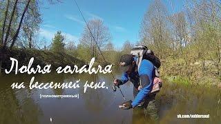 Ловля голавля весной на малой реке. Видео отчет от 8.05.2016 г.