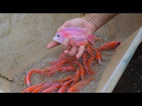 Fish Farm Tour - Imperial Tropicals