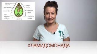 Строение Одноклеточных Водорослей на примере Хламидомонады / Биология онлайн с Александрой Соболевой