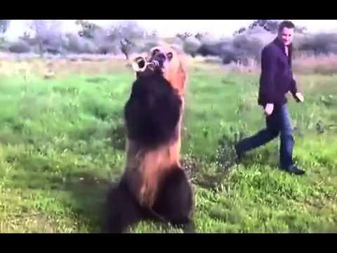yaramaz ayı mutlaka izlemelisiniz