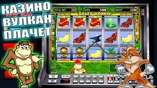 Победа в игровом слоте Crazy monkey! Игровые автоматы онлайн - удачный занос! Проверка казино Вулкан