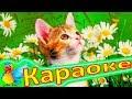 минусовка беспородная кошка