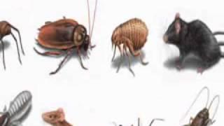 Pest Control Eastern Suburbs Sydney - Able Pest Abaitment - Bondi. NSW. 2026.