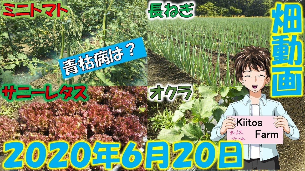 【2020/6/20】新規就農Kiitos Farmの畑動画