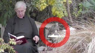 Während Online-Andacht: Schelmische Katze klaut Priester seine Pfannkuchen
