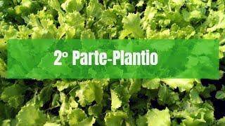 Como plantar Alface 🌱 (2 parte, plantio).