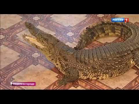 В Щелковском районе Подмосковья верблюд напал на своего хозяина и отгрыз ему руку.
