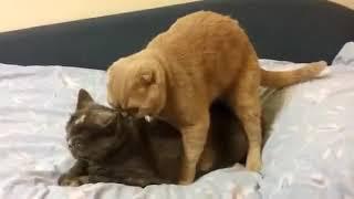 Xxxxx new sasy video hd cat sexxxx..hd