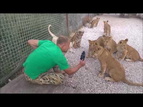 знакомства у львов