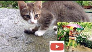 ГАЛЯ ТАГАЕВА Кошка тигра и ее котята 1 Принесла котёнку мышку