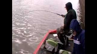 Fresh water drum (goo) Ouachita River - after white perch (crappie) RanGar