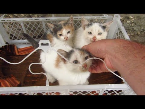 Kittens were waiting for me on the street in a box